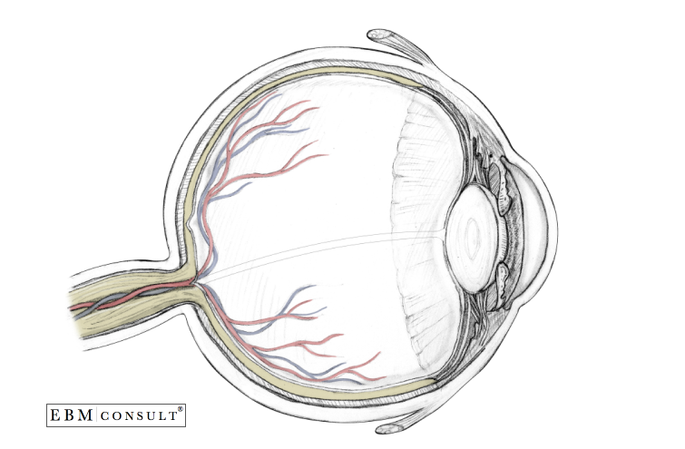Anatomy: Eyeball - Sagittal View