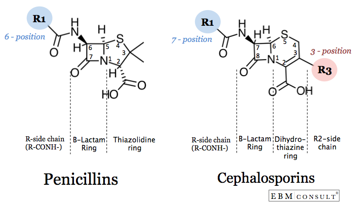 Penicillin vs Cephalsporin Antibiotic Structure Image